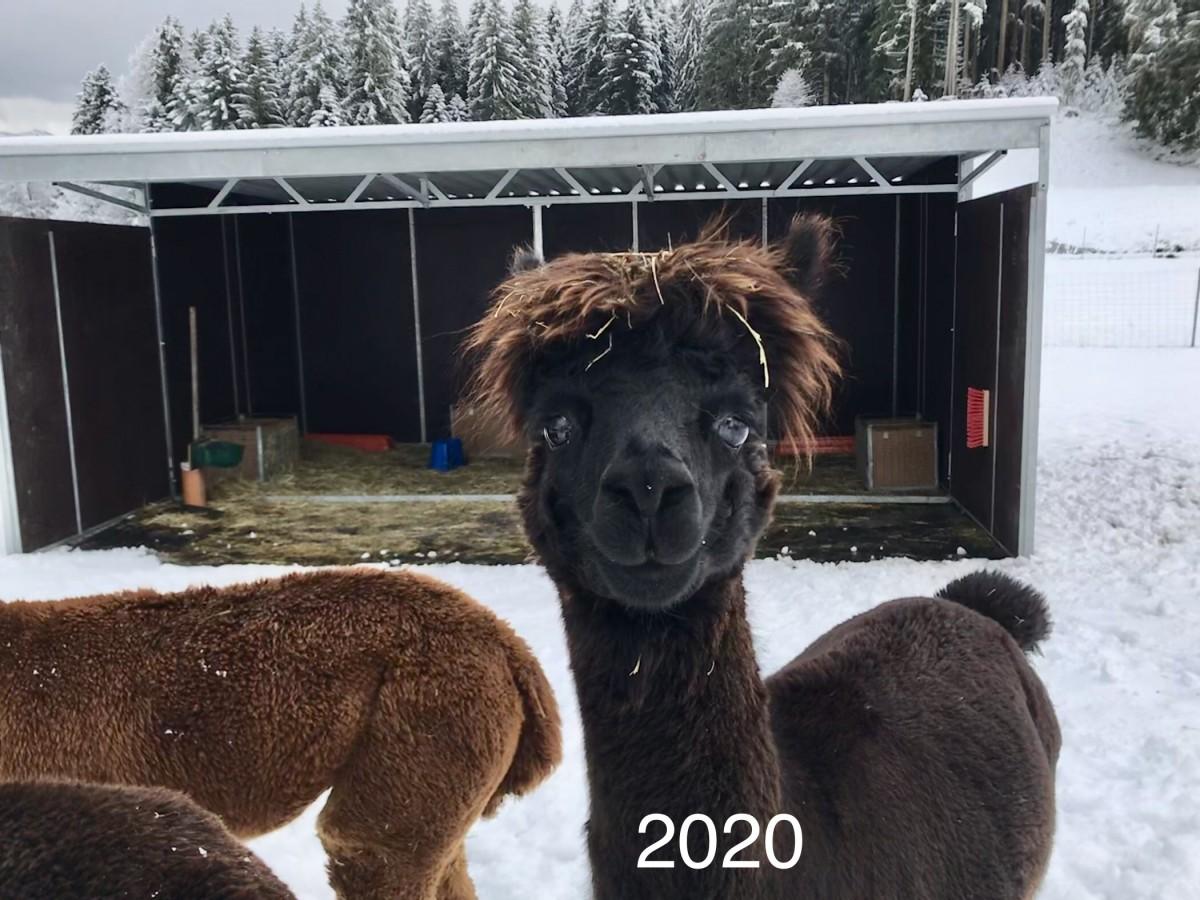 Zum Projekt: 2020